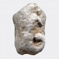 Miscellaneous Antiquities - Indian or Central Asian limestone elephant head